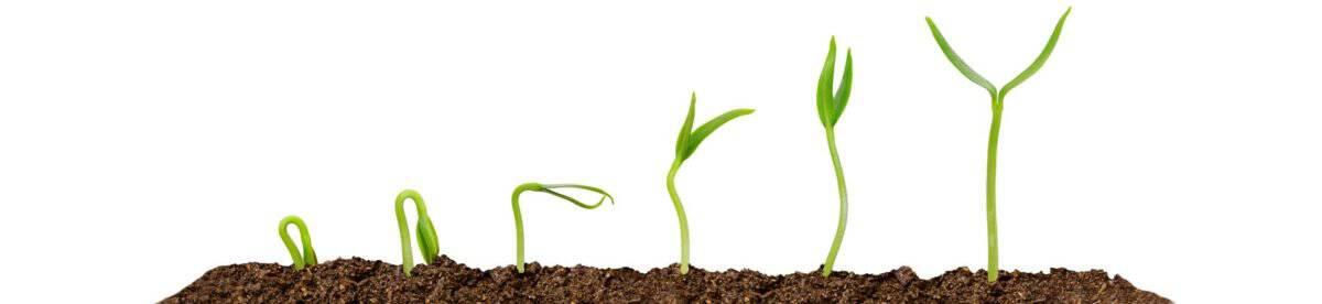 Atração de Clientes - Caminho de Crescimento
